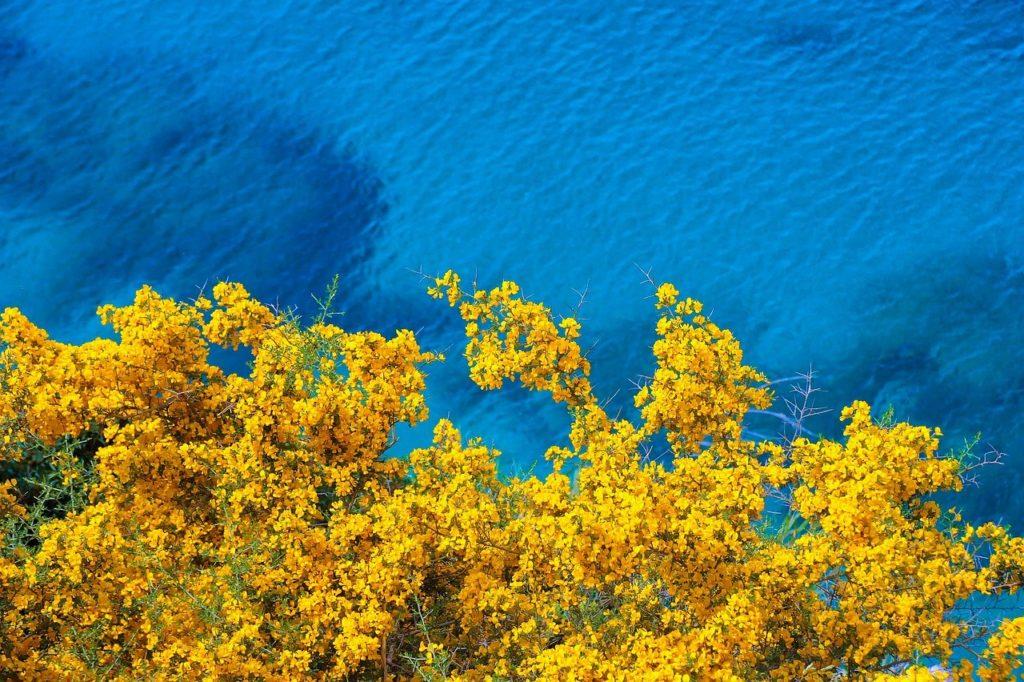 flowers, coast, sea-6558487.jpg